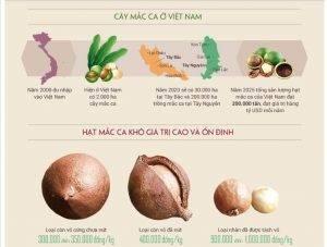 giá hạt macca khô